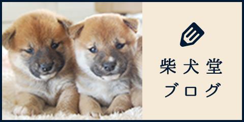 柴犬堂ブログ