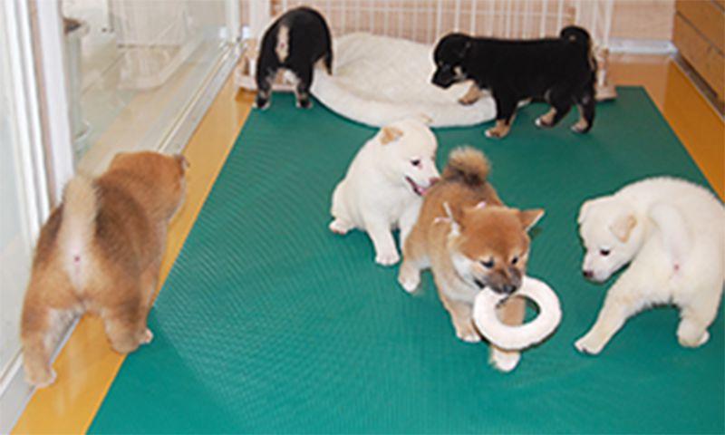 子犬の運動場