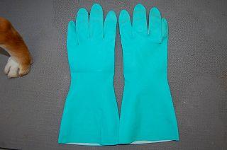 天然ゴムの手袋を使用した綿毛抜き
