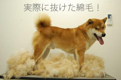 ファーミネーターで抜けた柴犬の綿毛量