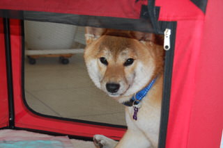 owner_s_20150601(9)