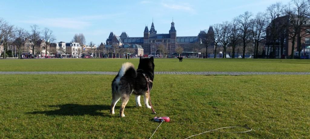 ドイツで幸せに暮らす柴犬